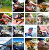 fly-fishing-images
